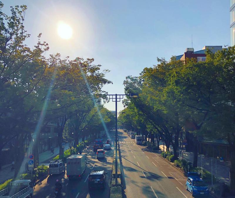 朝ランの表参道の景色