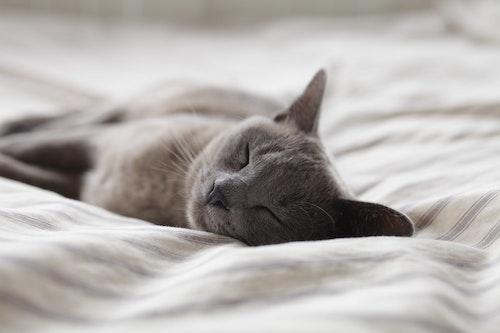 スタンフォード式 最高の睡眠